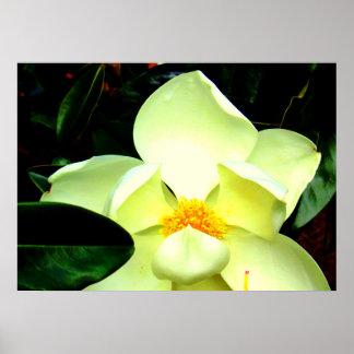 Póster Poster de la foto del flor de la magnolia