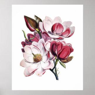 Póster Poster de la magnolia
