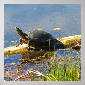 Póster Poster de la tortuga