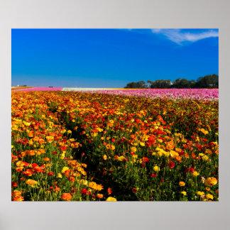 Póster Poster de los campos de flor de California 20X24