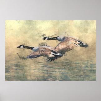 Póster Poster de los gansos de Canadá