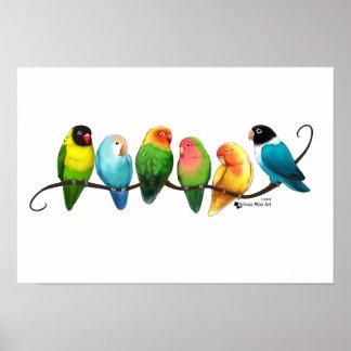 Póster Poster de los Lovebirds
