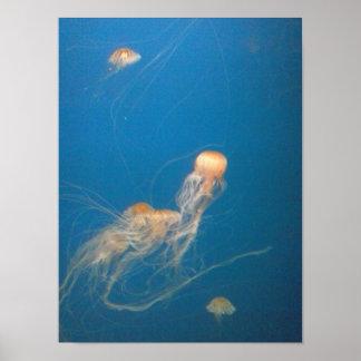 Póster Poster de los pescados de jalea