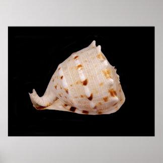 Póster Poster de Shell de la concha