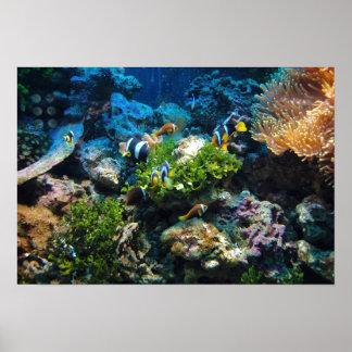 Póster Poster del arrecife de coral