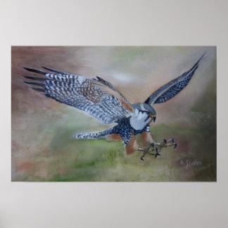 Póster Poster del halcón