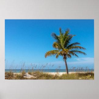 Póster Poster del palmtree de la playa de la Florida
