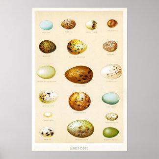 Póster Poster del vintage de los huevos de los pájaros