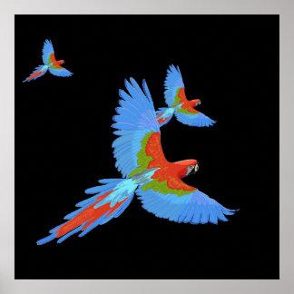 Póster Poster dibujado mano de tres Macaws que vuela