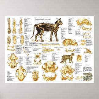 Póster Poster esquelético 18 x 24 de la anatomía del