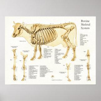 Póster Poster esquelético bovino de la anatomía de la