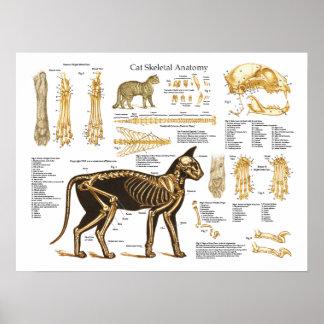 Póster Poster esquelético felino de la anatomía del gato