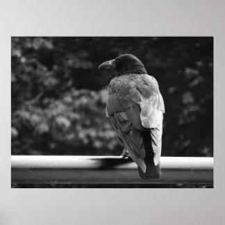 Póster Poster negro y blanco del pájaro
