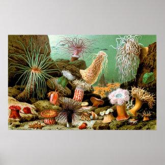Póster Poster subacuático de la escena de las anémonas de