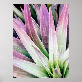 Póster Poster verde y púrpura de la yuca