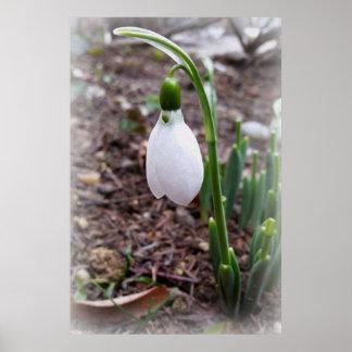 Póster Primavera en febrero