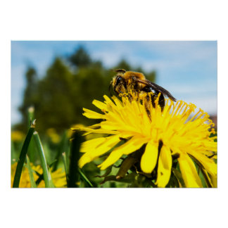 Póster Primer de la abeja