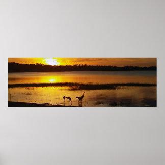 Póster Puesta del sol de Dora del lago florida con los