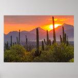 Póster Puesta del sol del cactus del desierto, Arizona