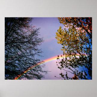 Póster Rainbow&Trees colorido