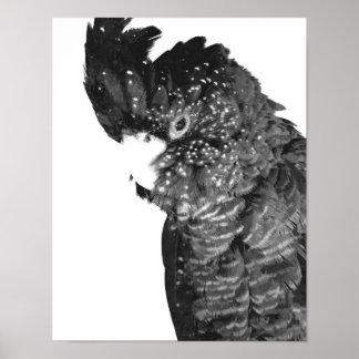 Póster Retrato blanco y negro del Cockatoo
