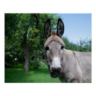 Póster Retrato precioso del burro