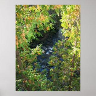 Póster río a través de los árboles