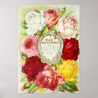 Póster Roses Dingee y catálogo de semilla de Conard