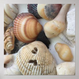 Póster Seashells a amar
