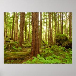 Póster Selva tropical templada de Alaska