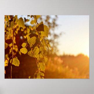 Póster Sol de la tarde en el poster de Finlandia