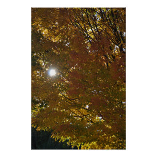 Póster Sol del otoño