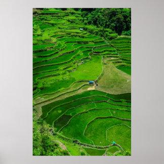 Póster Terrazas verdes del arroz, Filipinas