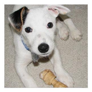 Póster terrier de Russell del enchufe del perrito