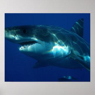 Póster Tiburón