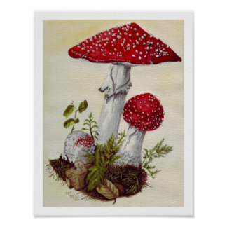 Póster Toadstool