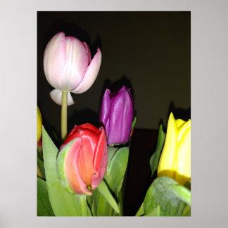 Póster Todavía de los tulipanes vida colorida