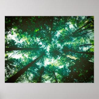 Póster Toldo de bosque