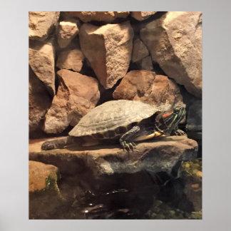 Póster Tortuga en una roca