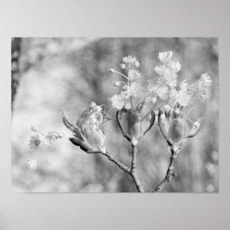 Póster Tres flores en el árbol