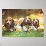 Póster Tres perritos de Basset Hound alegre que corren