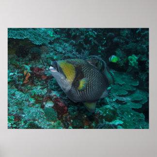 Póster Triggerfish del titán