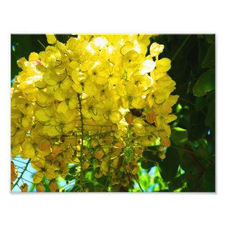 Poster tropical amarillo de las flores foto