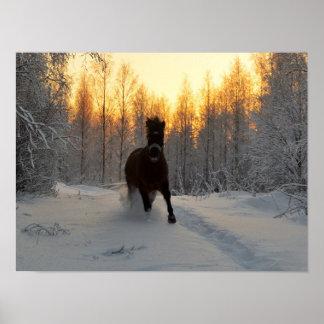 Póster Un caballo corriente en el invierno en Finlandia