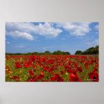 Póster Un campo por completo de flores rojas