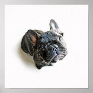 Póster Un perrito lindo del dogo francés