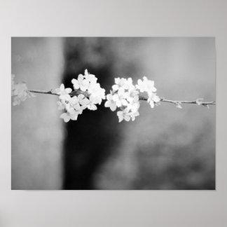 Póster Una flor blanca sola