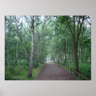 Póster Una trayectoria de bosque de Sherwood
