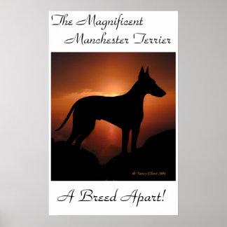 Poster único de Manchester Terrier Póster