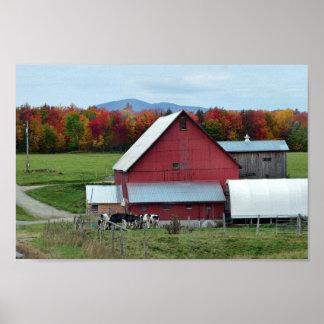 Póster Vacas lecheras de Vermont en el granero rojo